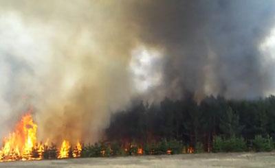 Лесной пожар в Самарской области в 2010 году. Кадр с сайта youtube.com пользователя retulov