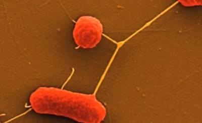 Немецкие ученые заявили о победе над кишечной инфекцией. Скриншот Youtube. Видео пользователя Bundeswehr