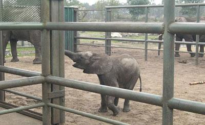 Слоновий загон в парке «Серенгети». Фото Olifant с сайта wikipedia.org