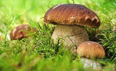 © fotoperle - Fotolia.com