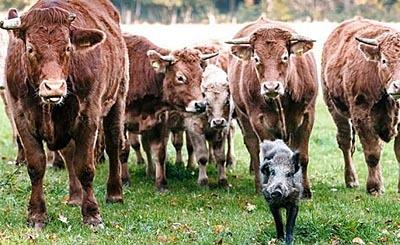 Фото с сайта www.hronika.info