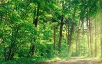 В Пфальце женщина выжила после девяти дней в одиночестве в лесу