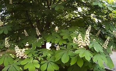 Видеокадр пользователя Всячина, YouTube